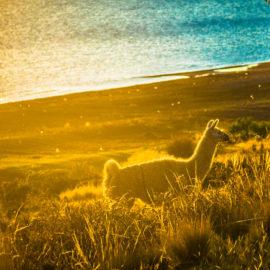 Alongside Lake Titicaca